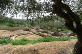 The ancient theater of Aptera
